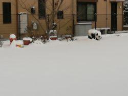 今日は大雪!!!